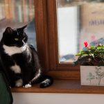 La seguridad de las ventanas depende de varios factores1920