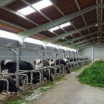 Naves para el alojamiento del ganado