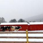 La importancia de los alojamientos ganaderos cuando hace frío1920