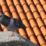 Cuando se realicen trabajos en un tejado hay que extremar las precauciones1920