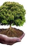 Keraben Grupo presenta el tercer Informe de Huella de Carbono1920
